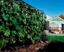 Vignoble La Roche des Brises