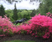 Venez visiter le Jardin de François au profit de la Société Alzheimer
