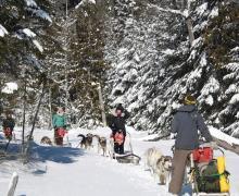 balade  demie journée chien de traineau motoneige laurel aventure nature