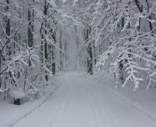 Parc régional Bois de Belle-Rivière | Ski de fond et raquette