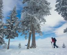 Parc régional Montagne du Diable | Ski de fond et raquette
