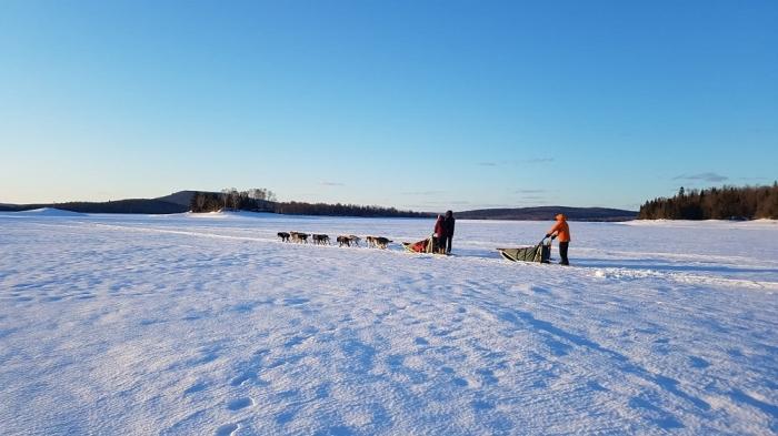 Traineau à chiens   Expérience nordique D-Tour