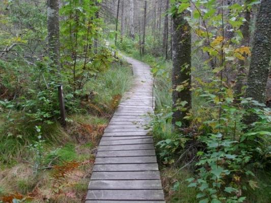 Sentiers aménagés, plusieurs parties en trottoir de bois.