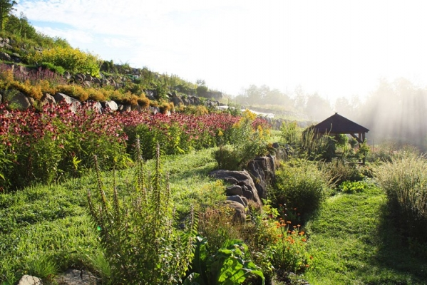 Certified organic garden of Medicinal Herbs