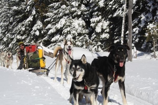 balade guidée motoneige et traineau à chiens laurel aventure nature