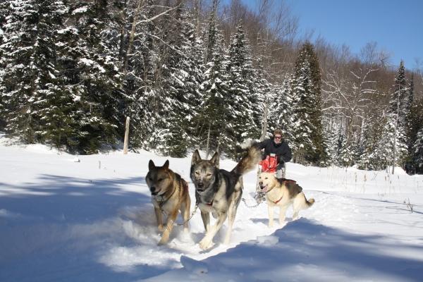 balade traineau à chiens guidée motoneige  laurel aventure nature